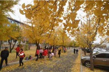 沈阳农业大学校园开放日是什么时候