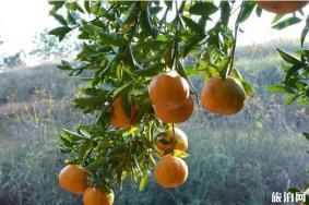丹江口柑橘采摘在哪里 丹江口橘子采摘园推荐