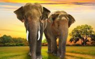 野象谷门票优惠政策 西双版纳野象谷景区旅游攻略