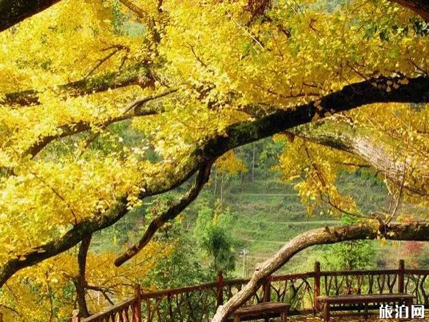 贵州秋天的几个小众景点介绍