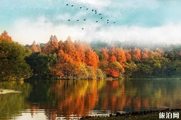 西湖秋天的景色有哪些 西湖秋季旅游攻略