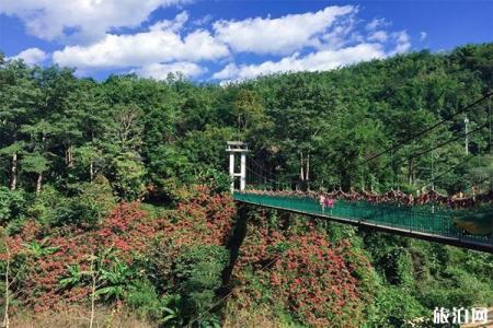 西双版纳原始森林公园丛林飞跃多少钱 公园门票+开放时间