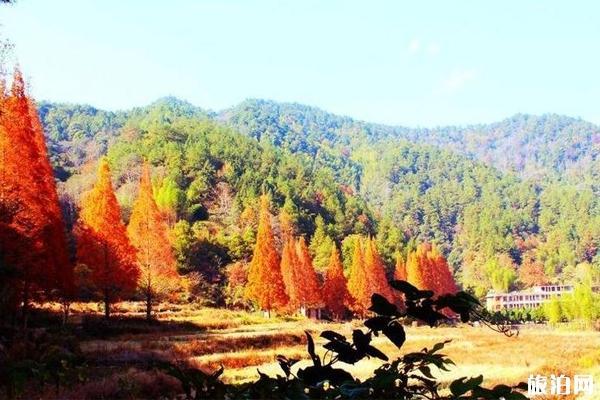 龙栖山自然保护区 龙栖山自然保护区简介 龙栖山自然保护区秋季旅游线路