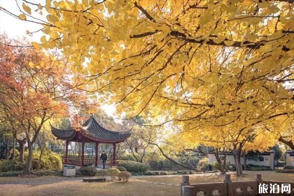 上海哪些地方可以赏秋