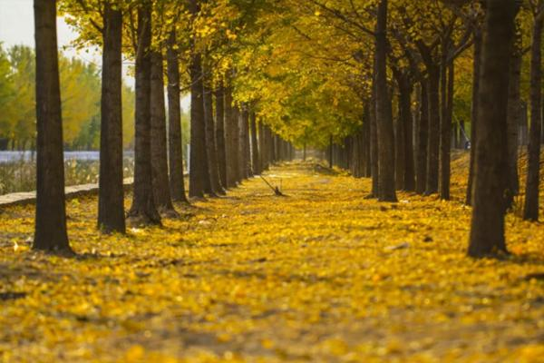 上海的秋天哪里景色最美