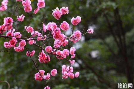 广东冬天有什么花开 广东冬天去哪里赏花