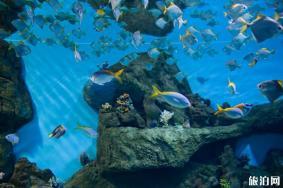 北京海洋馆建馆20周年半价门票哪里买 北京海洋馆20周年门票多少钱+活动时间