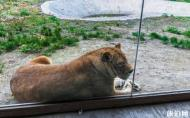 龍沙動植物園門票 是多少 龍沙動植物園介紹 龍沙動植物園交通路線