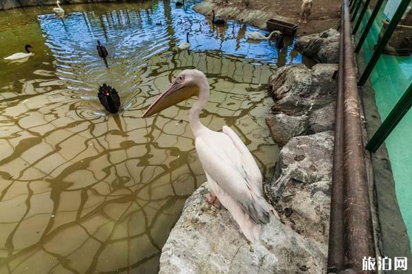 龙沙动植物园门票 是多少 龙沙动植物园介绍 龙沙动植物园交通路线
