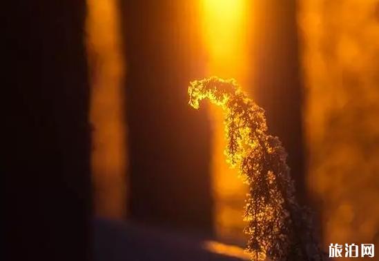 冬天的陽光怎么拍更美