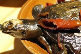 廈門鳳佬雞煲怎么樣 鳳佬雞煲好吃嗎