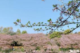 2020湖南省植物园