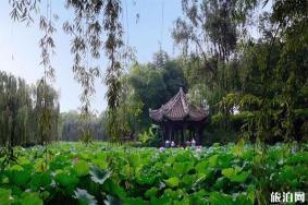 2020成都宝光桂湖