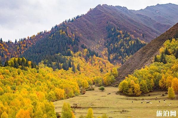 2020仙米國家森林公園旅游攻略 仙米國家森林公園門票價格
