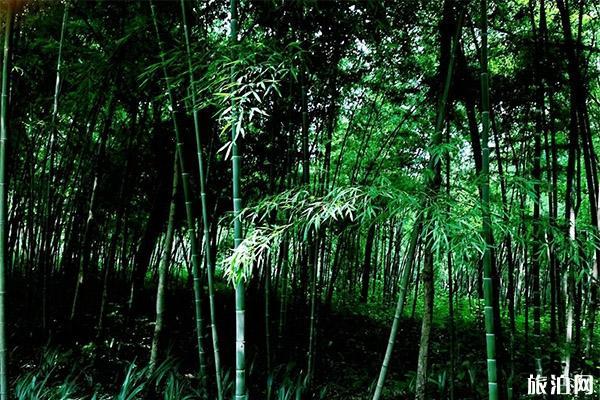 2020新津斑竹林公園怎么樣 新津斑竹林公園門票價格