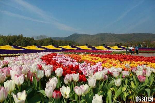 2020常州花谷奇缘春节庙会1月24日开启 时间+庙会内容