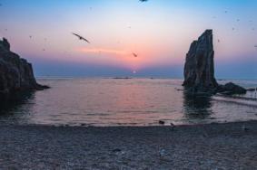 2020海驢島旅游攻略 海驢島自助游 海驢島門票交通景點介紹