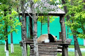 2020神雕山野生動物保護區旅游攻略 神雕山野生動物保護區自助游 神雕山野生動物保護區門票交通景點介紹