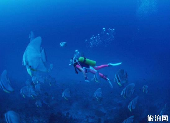 女生潛水需要注意什么 潛水會曬黑嗎