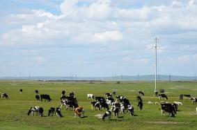 2020呼和諾爾草原旅游攻略 呼和諾爾草原門票價格