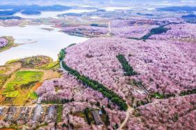 2020平坝万亩樱花园旅游攻略 平坝万亩樱花园门票价格