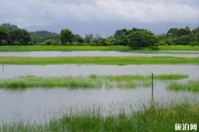 2020年香港濕地公園旅游攻略 門票交通天氣景點介紹