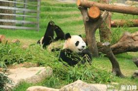 2020年澳门大熊猫