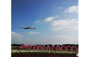 雙流空港花田郁金香花節1月25日開啟 持續時間-花節內容
