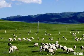 2020馬蘭花大草原旅游攻略 門票交通天氣景點介紹