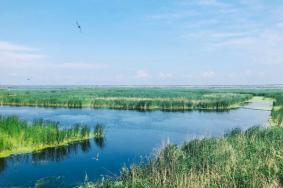 2020龍鳳濕地旅游攻略