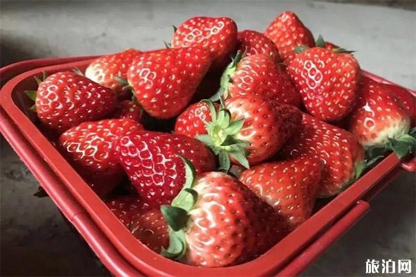 成都周邊冬草莓采摘基地推薦 附價格