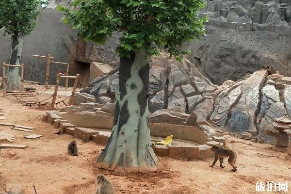石家庄动物园门票多少钱一张最新票价2020