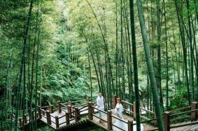2020赤水竹海国家森林公园旅游攻略