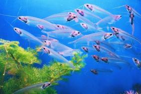 上海海洋水族馆门票多少钱-交通和游玩攻略