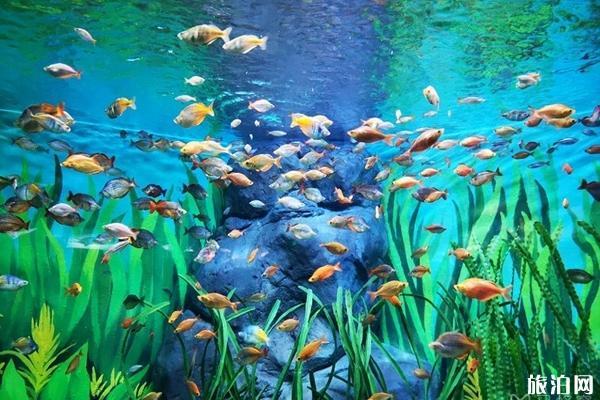 2020上海海洋水族館門票交通展區介紹