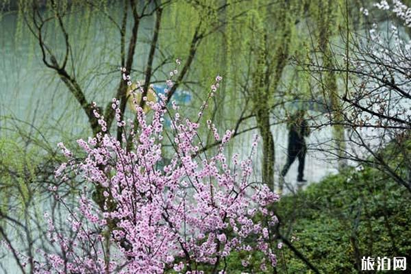 合肥六大赏梅胜地 合肥哪里可以观赏梅花