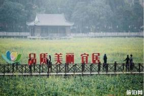 东莞桥头莲湖油菜花什么时候被铲除