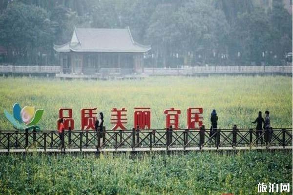 東莞橋頭蓮湖油菜花什么時候被鏟除