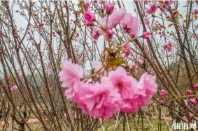 深圳鵬城美麗鄉村生態園門票 有哪些花觀賞