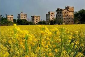 广东省十大油菜花观赏地 广东在哪里可以观赏到油菜花