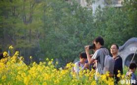 佛山亚艺公园油菜花什么时候开放