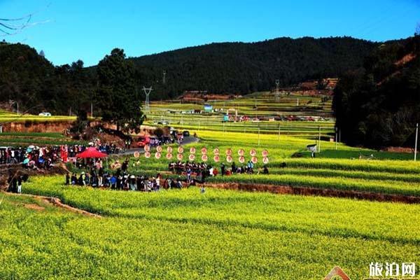 云南峨山县油菜花在哪里观赏 油菜花节时间