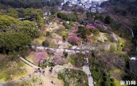 杭州靈峰梅林梅花有哪些品種 梅花觀賞指南