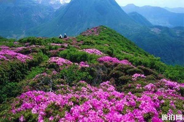 春季贵州赏花旅游景点推荐