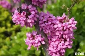 春季陕西赏花景点