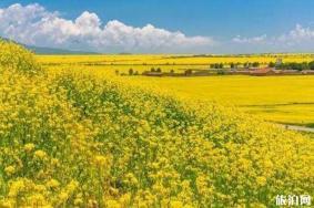 春季河北赏花的旅