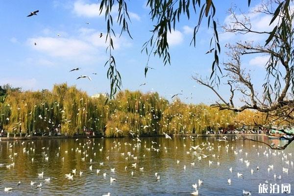 昆明翠湖公园好玩吗 景点介绍