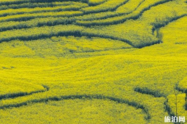 2020云南全年赏花地点和时间_游云南网