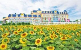 2020廣州百萬葵園