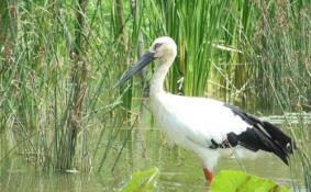 2020水鳥世界生態